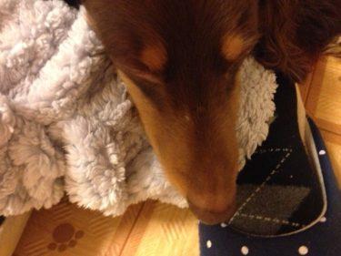 犬も温活する画像